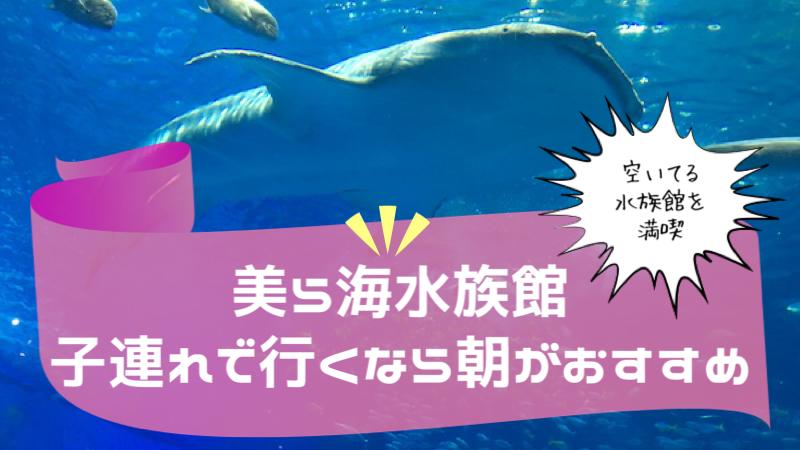 美ら海水族館子連れで行くなら朝がおすすめ