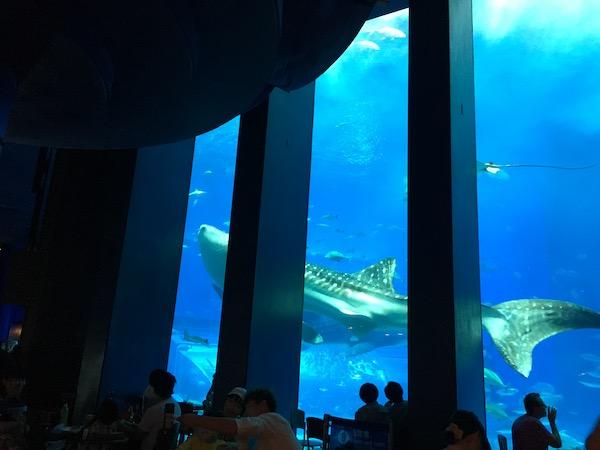 美ら海水族館のオーシャンブルーカフェ