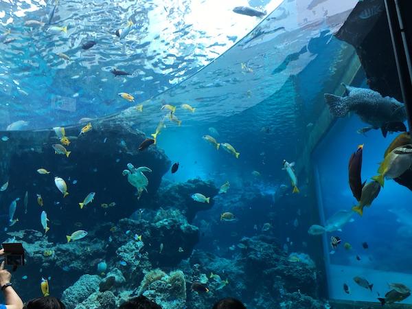 美ら海水族館の餌やりタイム